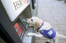 Service Banking Dogs